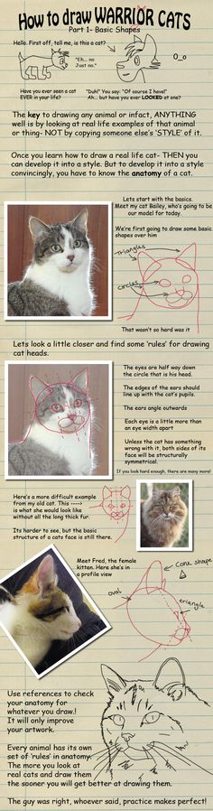 How to draw Warrior Cats pt 1 by *heylorlass on deviantART