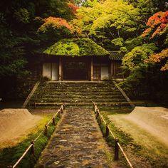 Miss you beautiful #Kyoto #kyotowalk #Honenin #mosstemple #summerJapan #日本 #京都 #京 #骨人