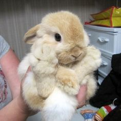 Big cute bunny | Teh Cute - Cute puppies, cute kittens & other adorable cute animals