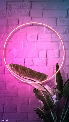 Tropical pink neon l Neon Light Wallpaper, Whats Wallpaper, Framed Wallpaper, Phone Screen Wallpaper, Flower Background Wallpaper, Cellphone Wallpaper, Aesthetic Iphone Wallpaper, Wallpaper Backgrounds, Wallpaper Iphone Neon