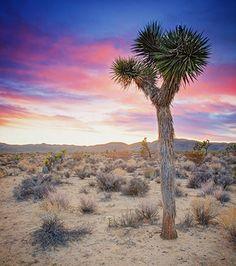 Sunset in the Mojave Desert | Flickr - Photo Sharing!