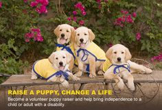 Our partnership with Canine Companions for Independence shows how dedicated we are to being community leaders and helping an extraordinary cause. We are currently raising a puppy, Riesling, who will grow up to be a service dog for an individual with disabilities.