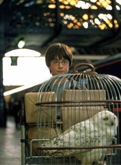 No momento em que Harry cruzou a barreira para a plataforma 9 3/4 pela primeira vez ele nem sonhava todas as aventuras e perigos que viveria nos anos seguintes....