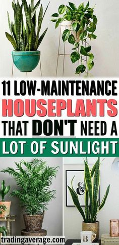 Looking for houseplants that don't need much sunlight? This article will give you 11 low-maintenance indo Looking for houseplants that don't need much sunlight? This article will give you 11 low-maintenance indoor plants that are easy to take care of! Low Maintenance Indoor Plants, Low Maintenance Landscaping, Low Maintenance Garden, Landscaping Plants, Garden Plants, Easy House Plants, Plants In The House, Indoor House Plants, Indoor Plant Decor