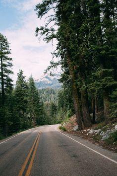 radventurers:  sequoia //