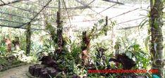 Kinabalu Park, National Parks, Plants, Plant, Planets