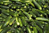 Growing Cucumbers, interesting bit on using a trellis.