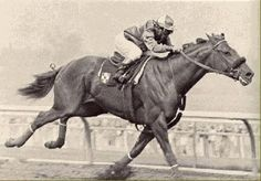 Silky Sullivan was an American race horse best known for his come-from-behind racing style. His name is now a term used in sports and politics for someone who seems so far behind the competition that they cannot win, yet they do.