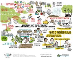 Stories of the Forest: Human Impacts of Deforestation