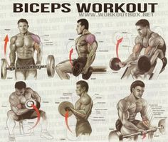 Biceps Workout - Healthy Fitness Workout Sixpack Back Calves - FITNESS HASHTAG Fitness Tips, Fitness Motivation, Health Fitness, Mens Fitness Workouts, Health Exercise, Best Biceps, Gym Workout Chart, Workout Tips, Biceps Workout