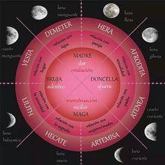 Ciclos femenino y lunar
