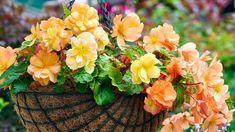 Begonia, Diving, Plants, Instagram, Scuba Diving, Plant, Planets