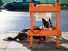 12 lifesaving tricks to teach your dog