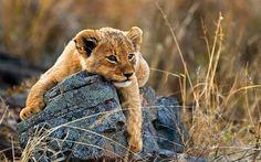 River Lodge, Sabi Sands Game Reserve, South Africa