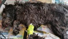 At 30/6/2015 - Still no Justice for Billy and no significant improvement on the whole animal welfare issue, animals are suffering EVERY DAY!   Therefore, the petition has been re-activated and will be shared as much as possible Internationally. We are also registering this Petition and will deliver...