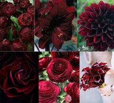 utahbrideblog.comflowersflower-friday-pantone-marsala-inspiration