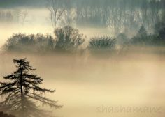 Tolkienesque Mystical and magical misty woodland by shashamane, $11.99