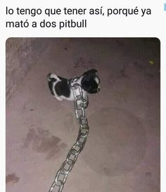 Read norteños ❤🤠 from the story memes con sabor a awa de uwu by The-Pitz (olovorgo) with 746 reads. Funny Spanish Memes, Spanish Humor, Wtf Funny, Funny Memes, Mexican Memes, New Memes, Animal Jokes, Funny Pictures, Instagram Posts