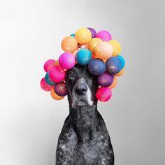 Hattet ihr auch solch ein verrücktes Wochenende? Startet gut in die neue Woche! Vielen lieben Dank @lookoflal für dieses wundervolle Foto! #goodmoods #dog #lookoflal #stringlights #lichterkette #hund #colors #lights #pink #orange #turquoise #petrol #sunday #weekend #mode #crazy #dogsofinstagram