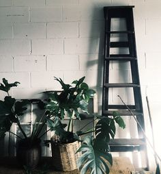 Pick the Perfect Houseplant now on the blog