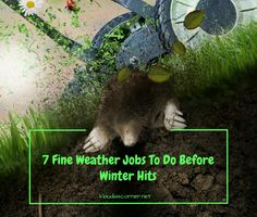 Outdoor Home Decor & Maintenance Tips - 7 fine weather jobs to do before…