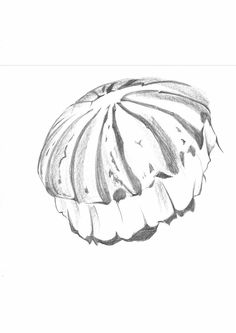 Sketch_Jellyfish_22