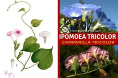 Plants, About Plants, Climber Plants, Medicinal Plants, Flower Seeds, Growing Up, Plant, Planets