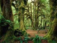 Hoh Rain Forest. Not too far from my home town.