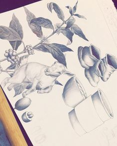 #throwback to when I drew this info-graphic about @dunnbroscoffee for class.. [Done in Ballpoint Pen] #drawing #infographic #dunnbros #dunnbroscoffee #dunnbrothers #coffee #pen #ballpointpen #ink #goat #dancinggoat #coffeeplant #artstudent #art #illustration #keepfindingart