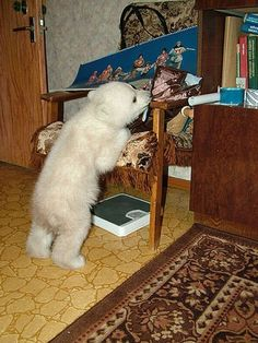 polarbearbabysaved-30   http://karapaia.livedoor.biz/archives/52061742.html