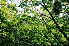 Trees     www220.litado.edu.vn  http://www220.litado.edu.vn/2012/12/01/giam-can-voi-nguoi-ban-ron