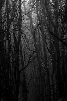 Sights and Strangers // Dark Woodland                                                                                                                                                                                 Mehr