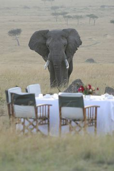 Find your perfect African safari. Best priced safari holidays available. Your trusted specialized safari operator. Out Of Africa, East Africa, African Elephant, African Safari, African Animals, Beautiful World, Animals Beautiful, Reserva India, Kenya