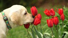 animales oliendo flores wallpaper - Buscar con Google