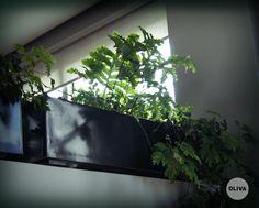 Jardín Particular - interior + exterior Diseño de Paisaje: Ariel Oliva Ph: Luz Dinucci