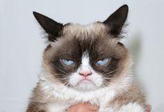 Топ-25 лучших мемов за всю историю интернета: Nyan cat, доге, рикролл и другие…