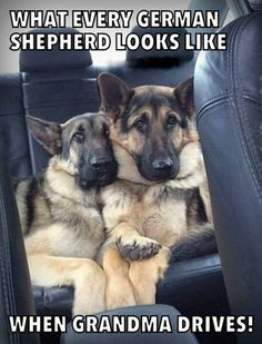 GSDs....are we there, yet???!!!