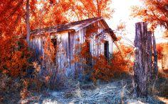 Autumn is Here Buy Prepasted Wallpaper Murals Online