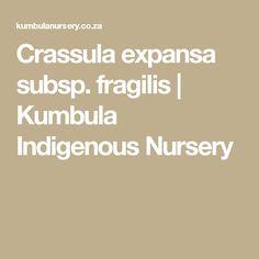 Crassula expansa subsp. fragilis | Kumbula Indigenous Nursery