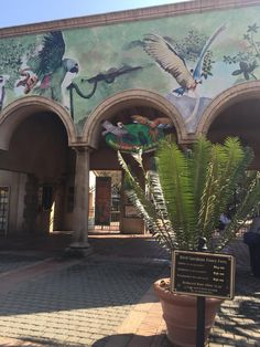 Bird garden at Montecasino (Sandton, South Africa) Casino Reviews, Running Away, Top Rated, South Africa, Trip Advisor, African, Tours, Number, Bird