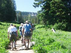 1. Hikers walk from the Brighton Center through a large wildflower meadow.