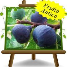 Best Seller di Euro Plants Vivai. Le Piante di Fico in vaso più apprezzati dai nostri Clienti, in base alle vendite.