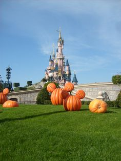 Disneyland Paris 2010 Disneyland Paris, Disney Land, Disney Halloween, Pumpkin, Outdoor, Buttercup Squash, Disneyland, Outdoor Games, Squash