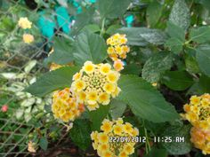 my garden...  Colombia