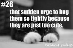 This is so me! I would want to hug the crap out of my cat because he was so dang cute but I didn't want to hurt him.