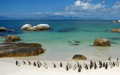 "Boulder Beach in South Africa. I still laugh at the ""Look under your cars for pinguins"" sing at the parking lot. South Africa Beach, South Africa Tours, Cape Town South Africa, Port Elizabeth, Knysna, Places To Travel, Places To See, Travel Destinations, Magic Places"