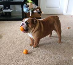 My ball...no Orange!  Lol