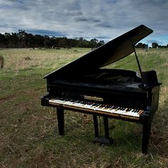 'Symphony for Sheep' by Michelle Shoosmith Reflection Photography, Grand Piano, Western Australia, Sheep, Creative