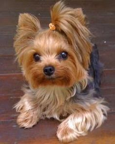 I Love all Dog Breeds: 5 Most Popular Dog Breeds in the USA