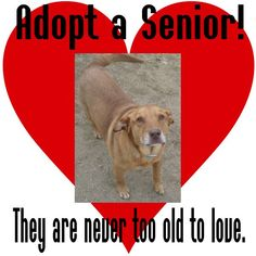 Adopt a senior pet!  Older animals are calm, laid back, and loving.